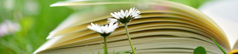 aufgeschlagenes Buch auf Blumenwiese, Credit. Pixabay