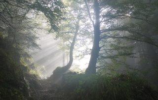 Waldlichtung, im Hintergrund Sonnenstrahlen, Credit: MonikaP, Pixabay
