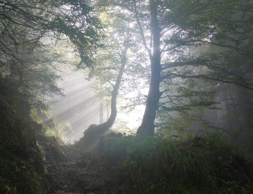 Ocrelizumab: Warnung vor übertriebener Hoffnung