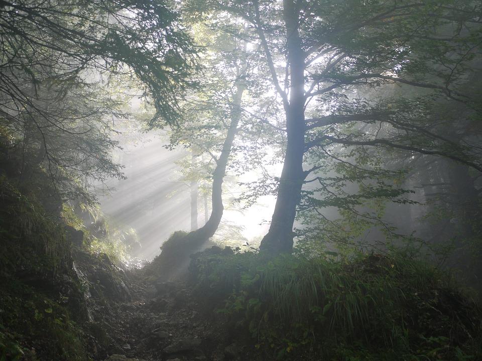 Symbolbild Hoffnung: Waldlichtung, im Hintergrund Sonnenstrahlen, Credit: MonikaP, Pixabay