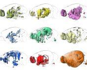 In silico Vorhersage der Gehirnfunktions-Neuroanatomie durch genetisch gewichtete Konnektivitätsanalyse (genetically weighted connectivity analysis, GWCA). Die funktionellen Karten wurden aus gewichteten Gehirnnetzwerken mit funktionellen genetischen Metadaten generiert, die mit zentraler Amygdala-Schaltung, Dopamin-Signalgebung, Fütterung, hypothalamischer Schaltung, Angstgedächtniskonsolidierung, Panikstörung, Lernen in einem stressigen Kontext, sozialer Bindung und synaptischer Plastizität in Verbindung stehen (von links nach rechts, oben nach unten). © VRVis/IMP