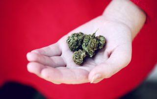 Cannabisblüte in einer Hand, Credit: Sharon McCutcheon, Unsplash