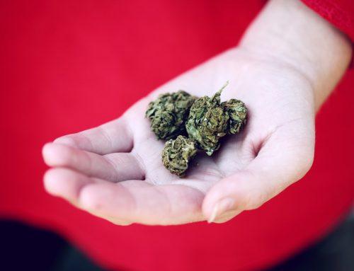 Keine Freigabe von Cannabisblüten