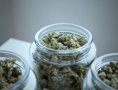 Cannabis-basierte Medikamente gegen chronische Schmerzen