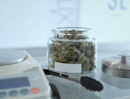 Cannabisblüten: Liberalisierung nur beiÄnderung wissenschaftlicher Erkenntnisse