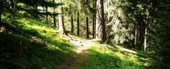 Waldweg, Foto:Kerstin Huber-Eibl