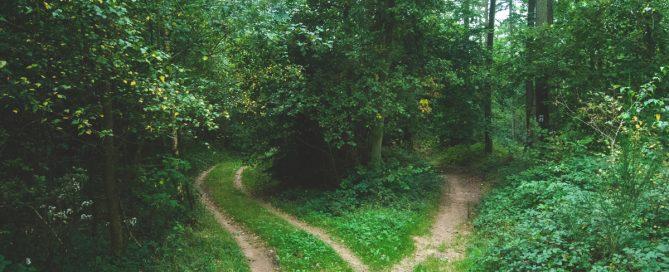 Symbolbild Entscheidung: Weggabelung im Wald, Foto: Jens Lelie, Unsplash