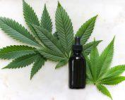Cannabisblüten, Foto: Kimzy Nanney