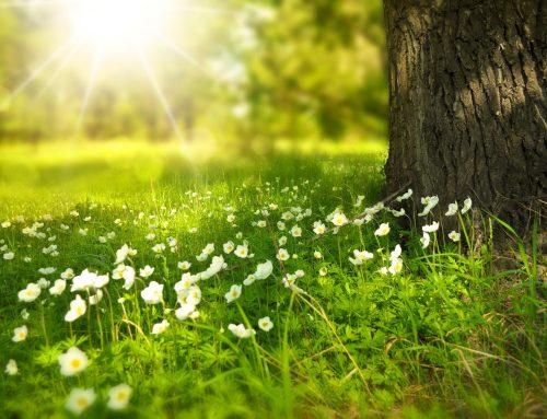 Studie: Lichttherapie bei Fatigue und Tagesschläfrigkeit