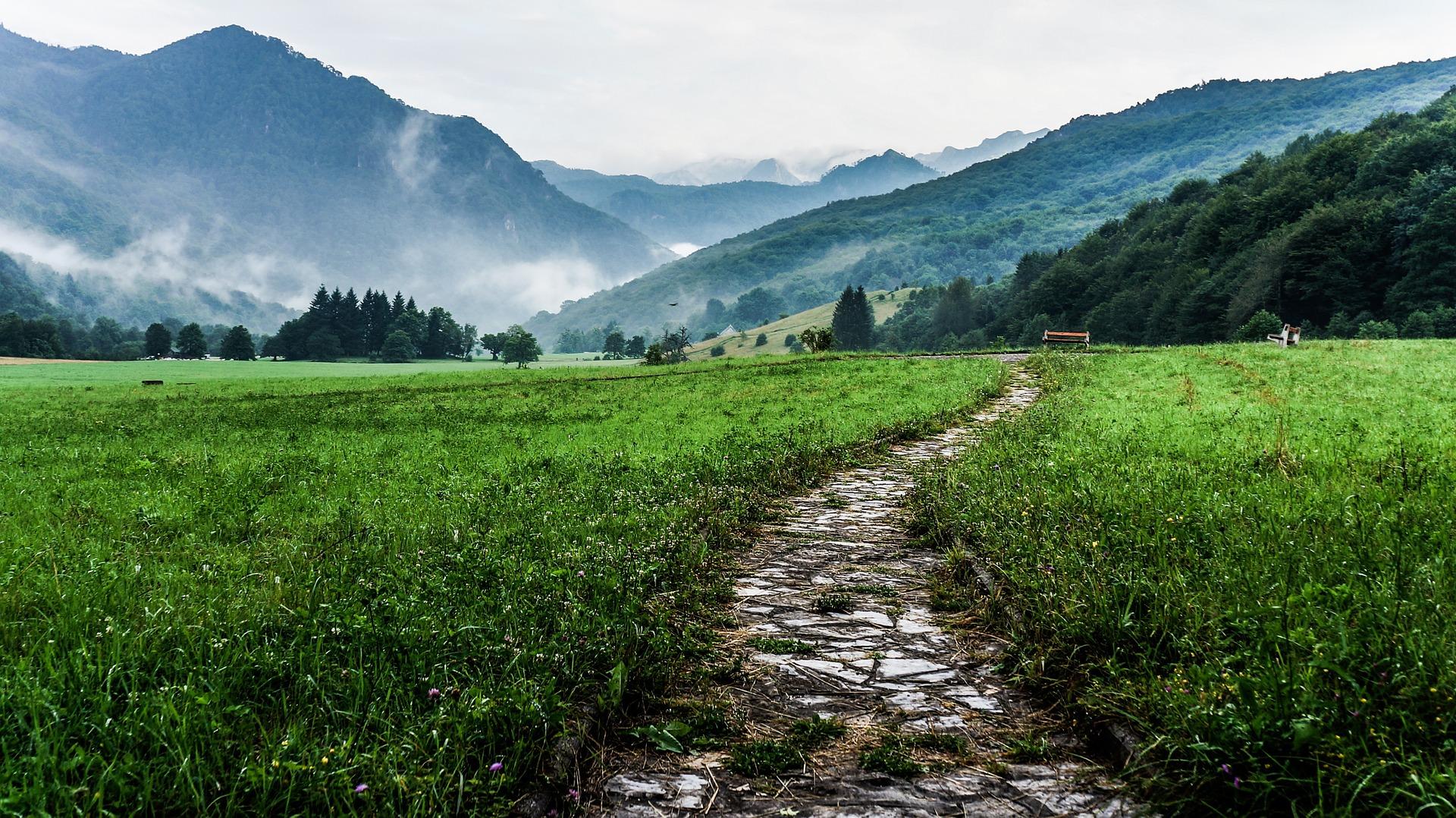 Weg in grüner Wiese im Nebel